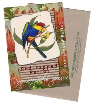 Red Capped Parrot Greeting Card