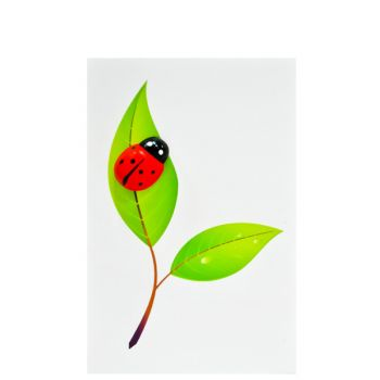 Small Card Ladybird Leaf