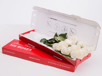 Lucky 8 White Cream Roses With Gift Box