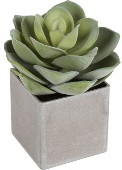 CONCA CEMENT SUCCULENT IN POT 21CM